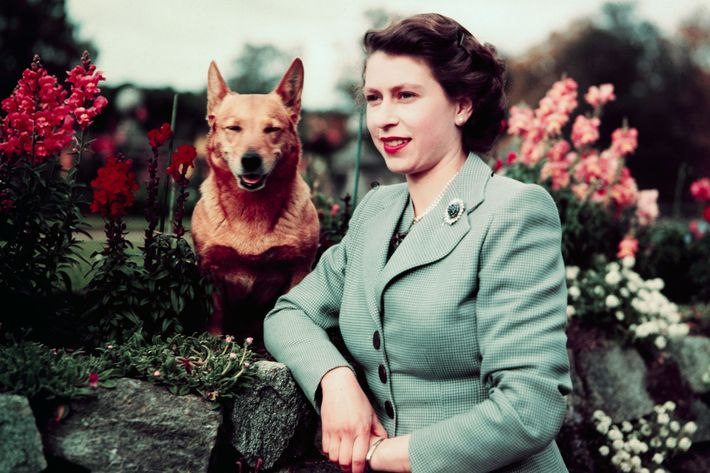 Queen Elizabeth in Garden with Dog