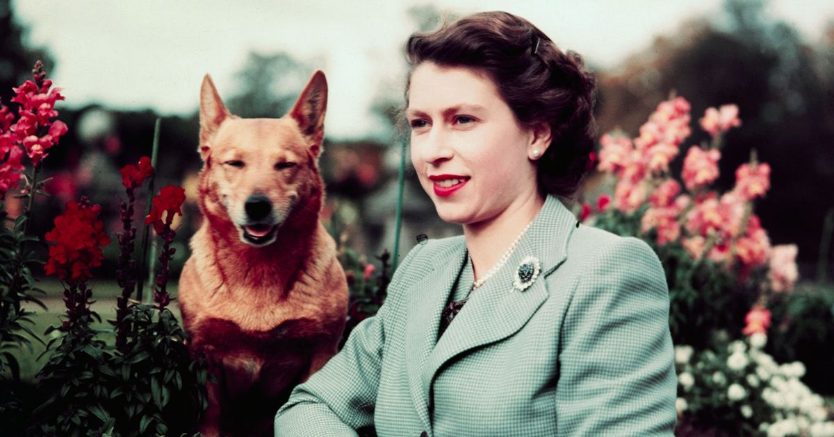 the life of queen elizabeth ii the queen of the united kingdom canada australia and new zealand sinc Queen elizabeth ii, the longest-reigning british monarch, turned 90 on april 21 in celebration of her birthday, here are 90 facts about her life: 1 she was born at 2:40 am on april 21, 1926.