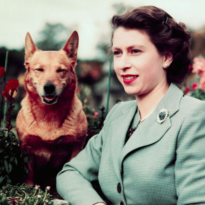 Queen Elizabeth in Garden with Dog