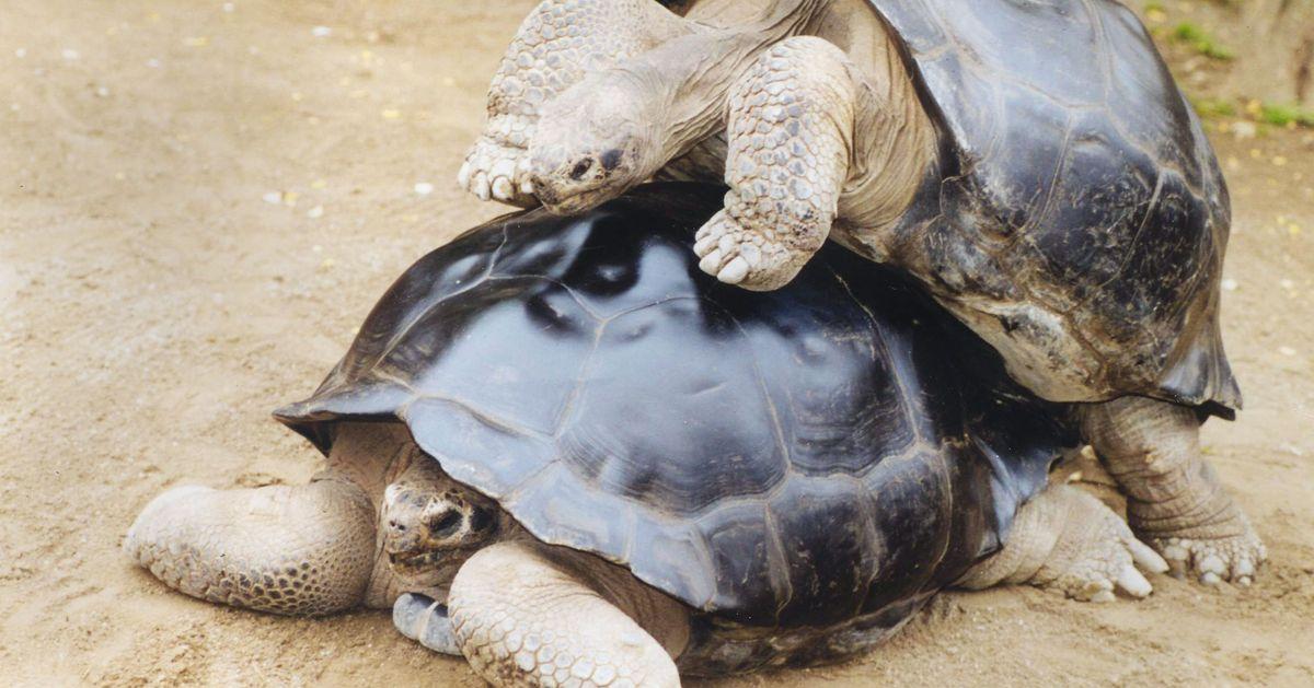 Tortoise Break Up