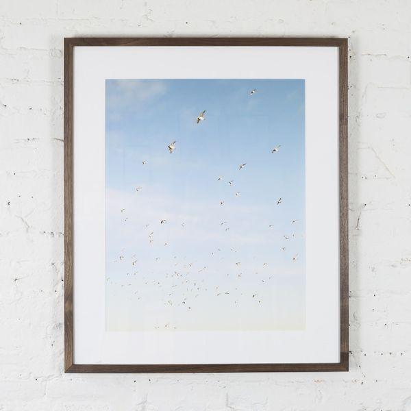 Tommy Kwak, 'Puffins (Faroe Islands)'