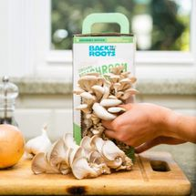 Back to the Roots Organic Mushroom Growing Kit
