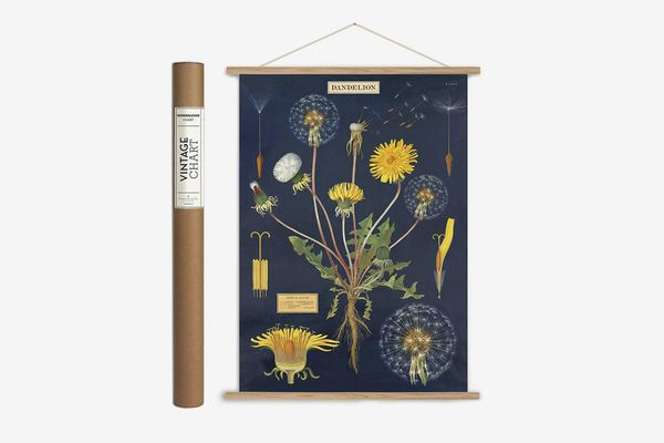 Cavallini Papers & Co. Vintage Dandelion Hanging Poster Kit