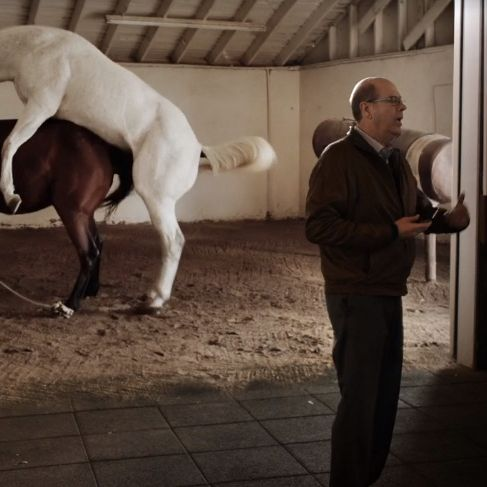 Guy having sex with horse photo 39