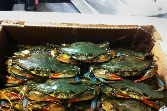 Soft-Shell Crab Season Has Begun! (Somewhat)