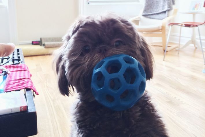 14 Best Dog Toys And Chew Toys For All Breeds And Sizes 2018