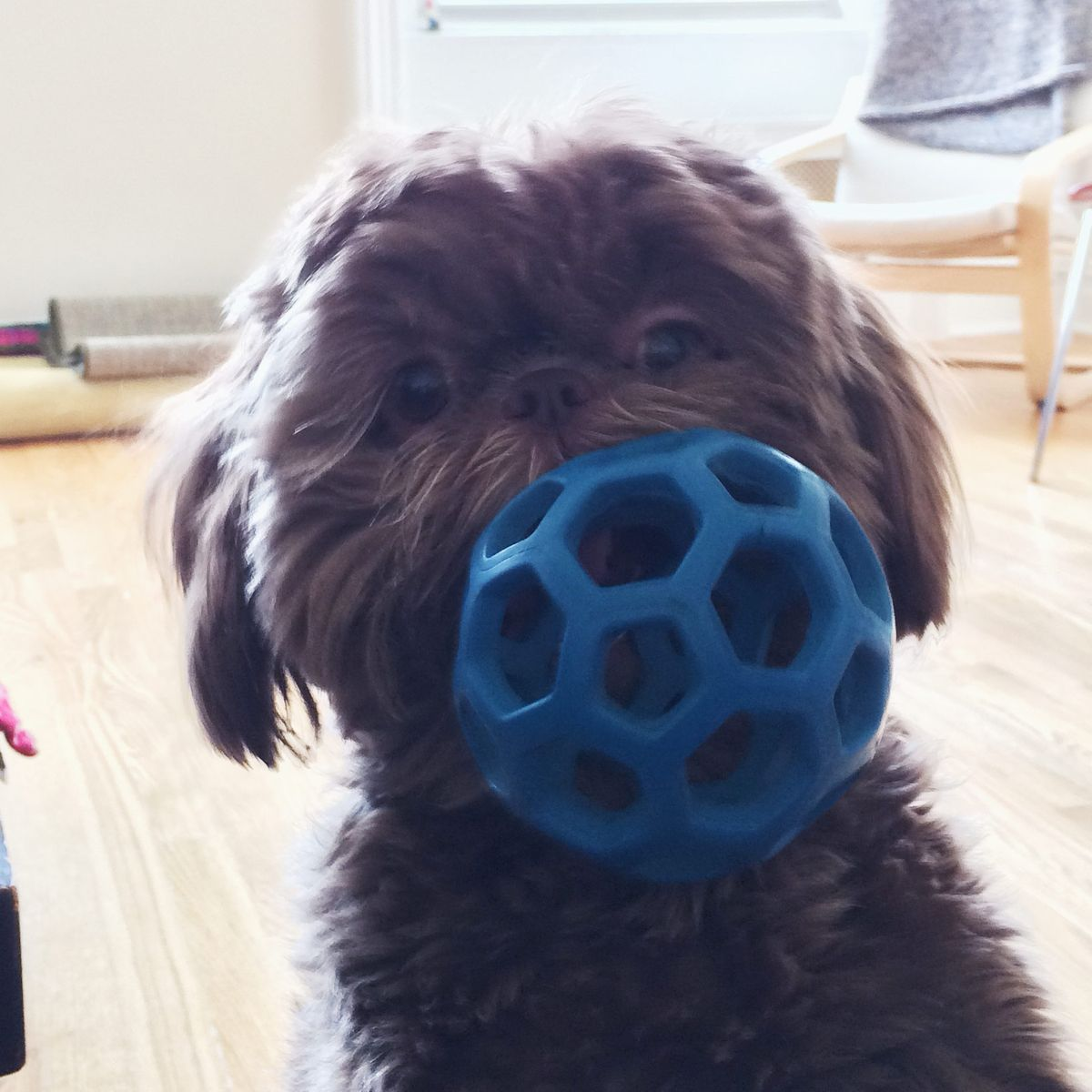 14 Best Dog Toys and Chew Toys for All Breeds and Sizes 2018 | The  Strategist | New York Magazine