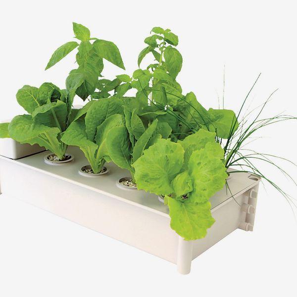 Hydrofarm Hydroponic Salad Garden Box Kit