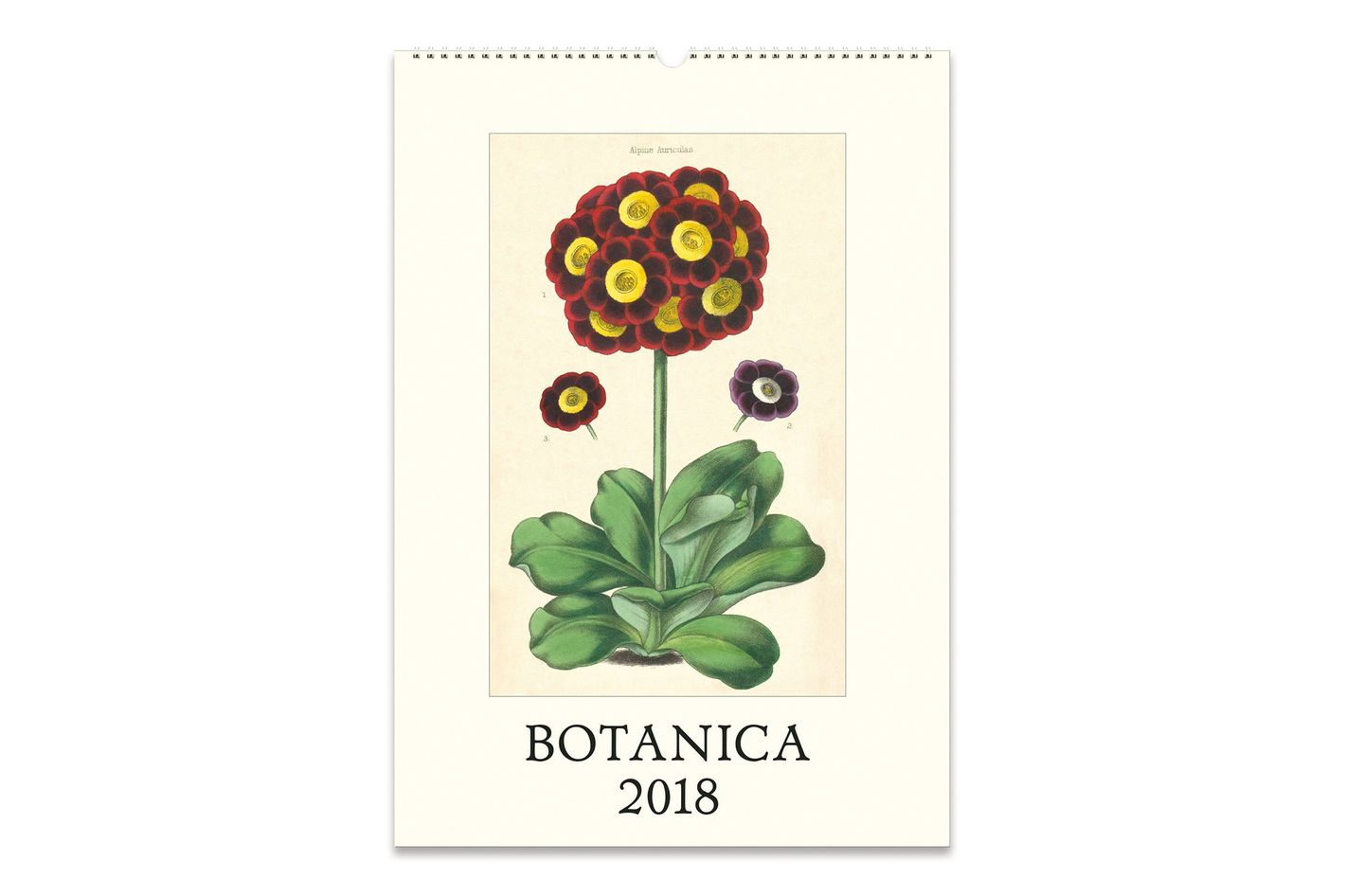 Cavallini Papers Botanica 2018 Wall Calendar