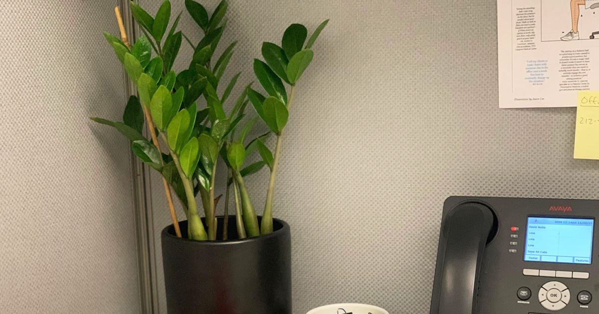The 6 Best Plants For Cubicles According To Plant Experts