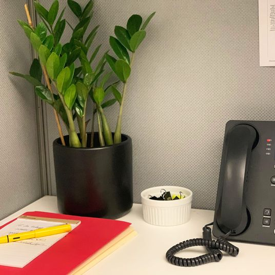 The Best Low Light Plants For Office Cubicles, According To Experts