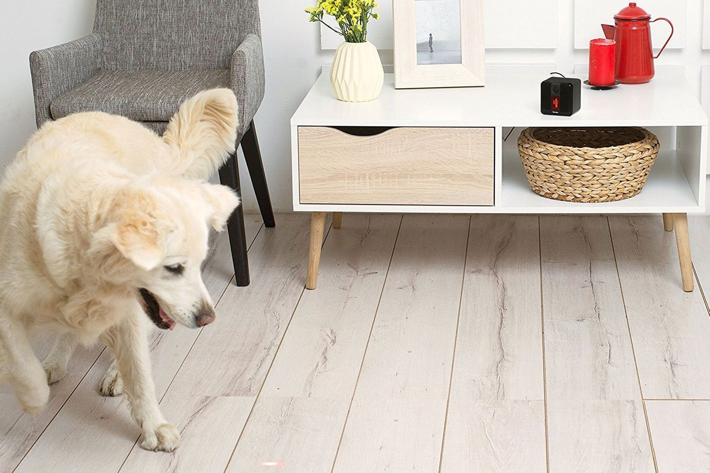 Petcube Play Wi-Fi Pet Camera