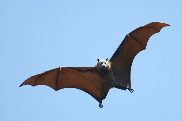 scientists have decoded bat language heres what theyre saying - Picture Of A Bat