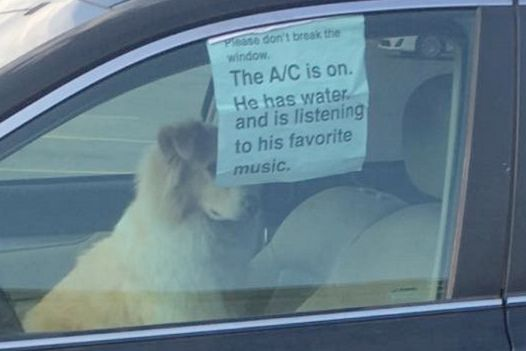Image result for dog has ac in car