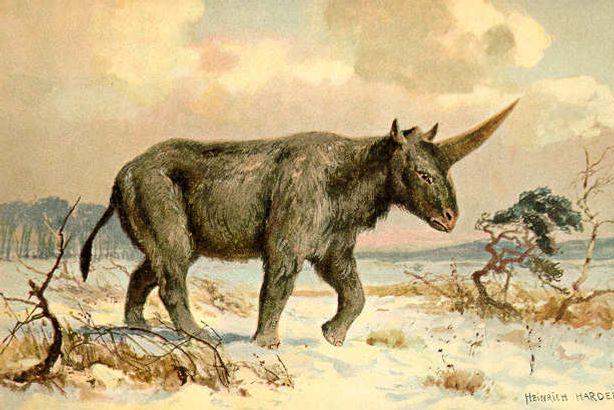The real Siberian unicorn, <i>Elasmotherium sibiricum</i>.