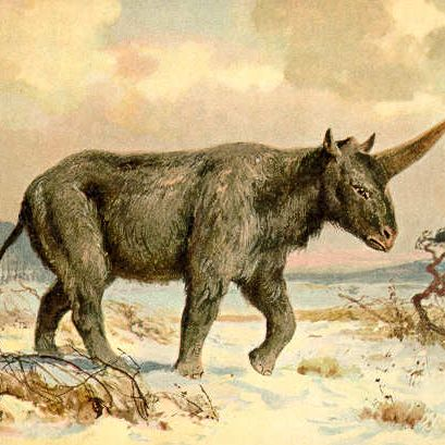 The real Siberian unicorn, <i>Elasmotherium sibiricum</i>.