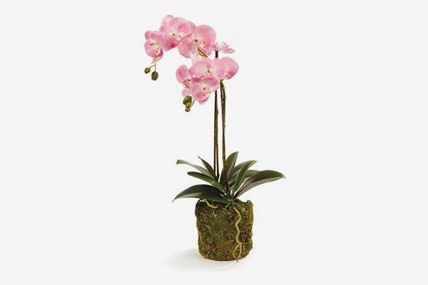 Napa Home and Garden Conservatory Phalaenopsis Drop-In Silk Orchid, 23-Inches