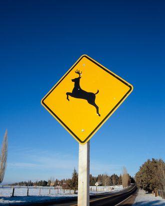 Deer Crossing Sign on Rural Road.