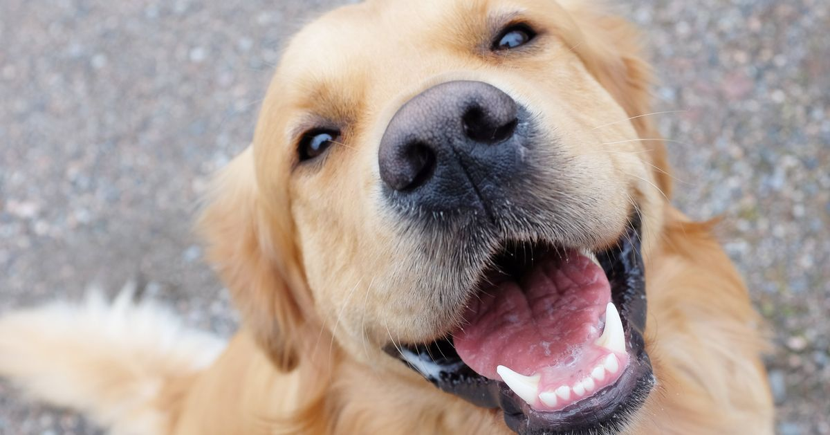 Cracking the Code of Your Pet's Facial Expressions