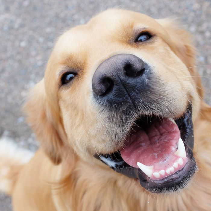 Cracking the Code of Your Pet\'s Facial Expressions -- Science of Us