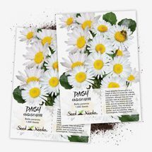 Seed Needs White English Daisy Twin Pack of 1,000 Seeds