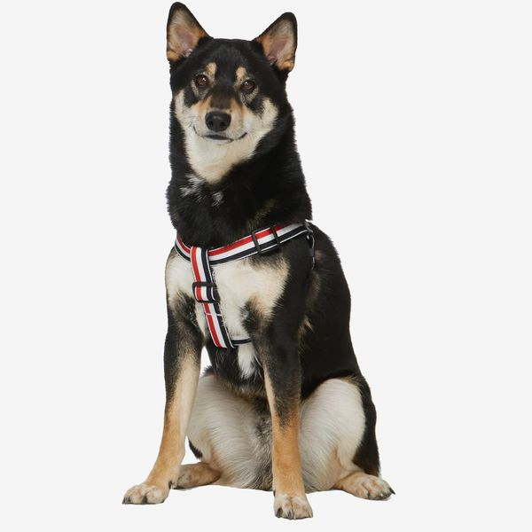 Thom Browne Tricolor Webbing Dog Harness