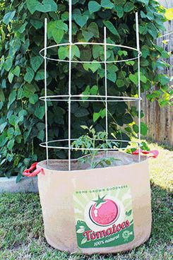 Texas Tomato Cages 24