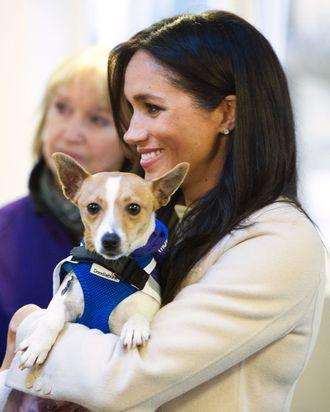 Meghan Markle with a dog.