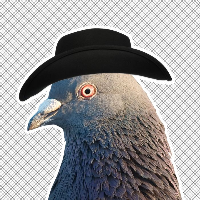 Someone is putting cowboy hats on pigeons.