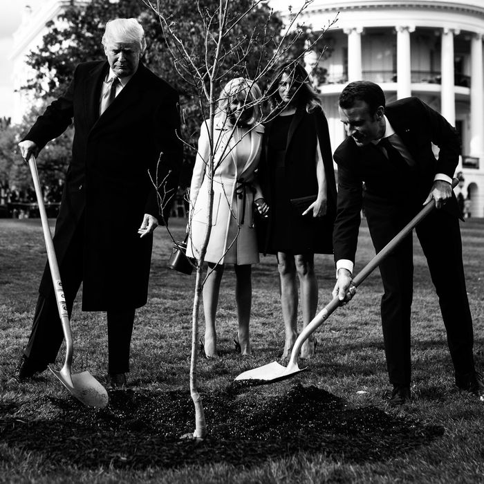 Donald Trump and Emmanuel Macron planting a tree.