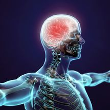 How Does Your Brain Control Your Body?