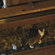 Two kittens were spotted on the tracks on the B/Q lines at the Chuch Av. station on Thurs., August 29, 2013. Service was suspended while Transit personnel attempted to corral the furry pair. They were no longer deemed to be in immediate danger as they remained out of the path of trains and avoided the third rail.Photo: Marc A. Hermann / MTA New York City Transit