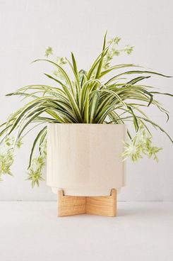 Urban Outfitters Cecily Planter + Stand