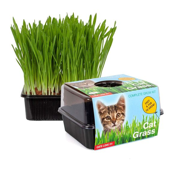 Total Green Holland Amazing Cat Grass Grow Kit