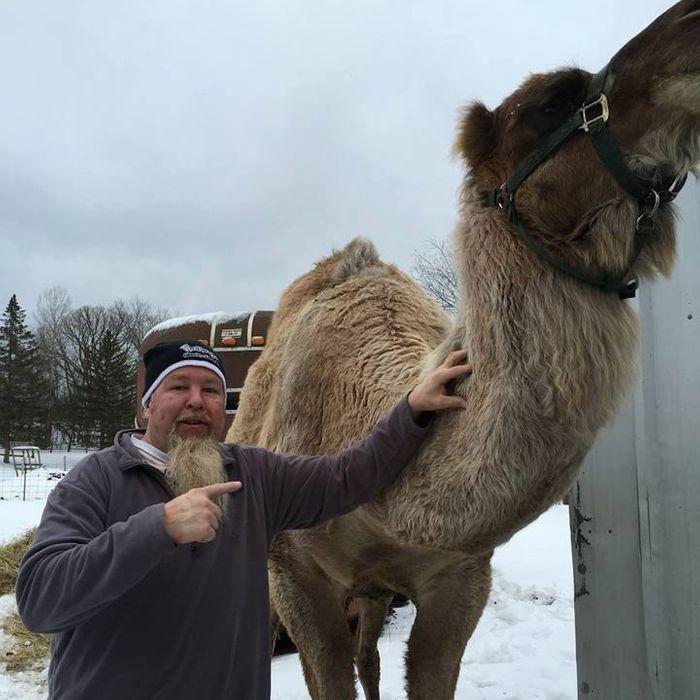 Dooley the camel.