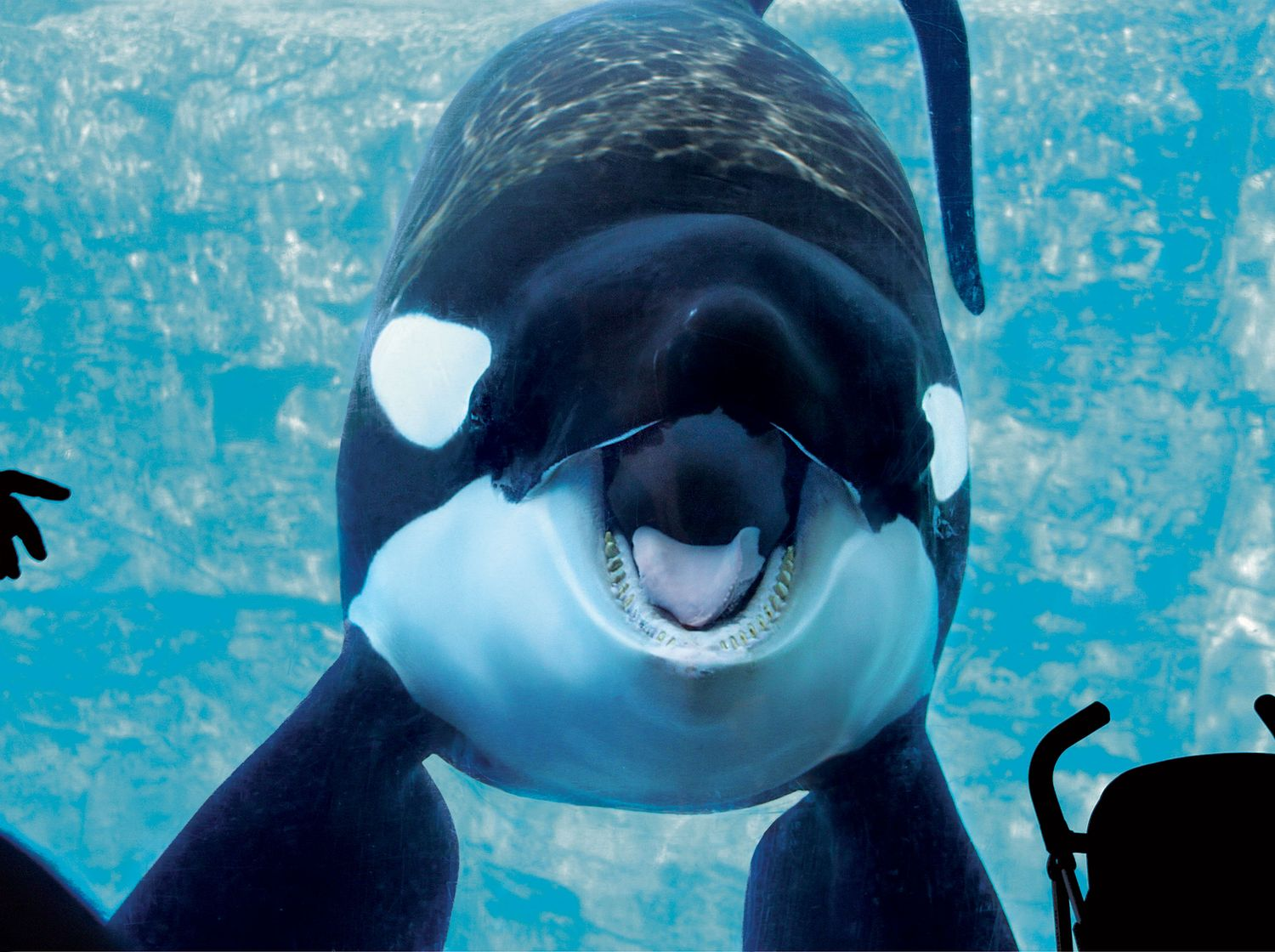in the battle at seaworld the whales have won nymag