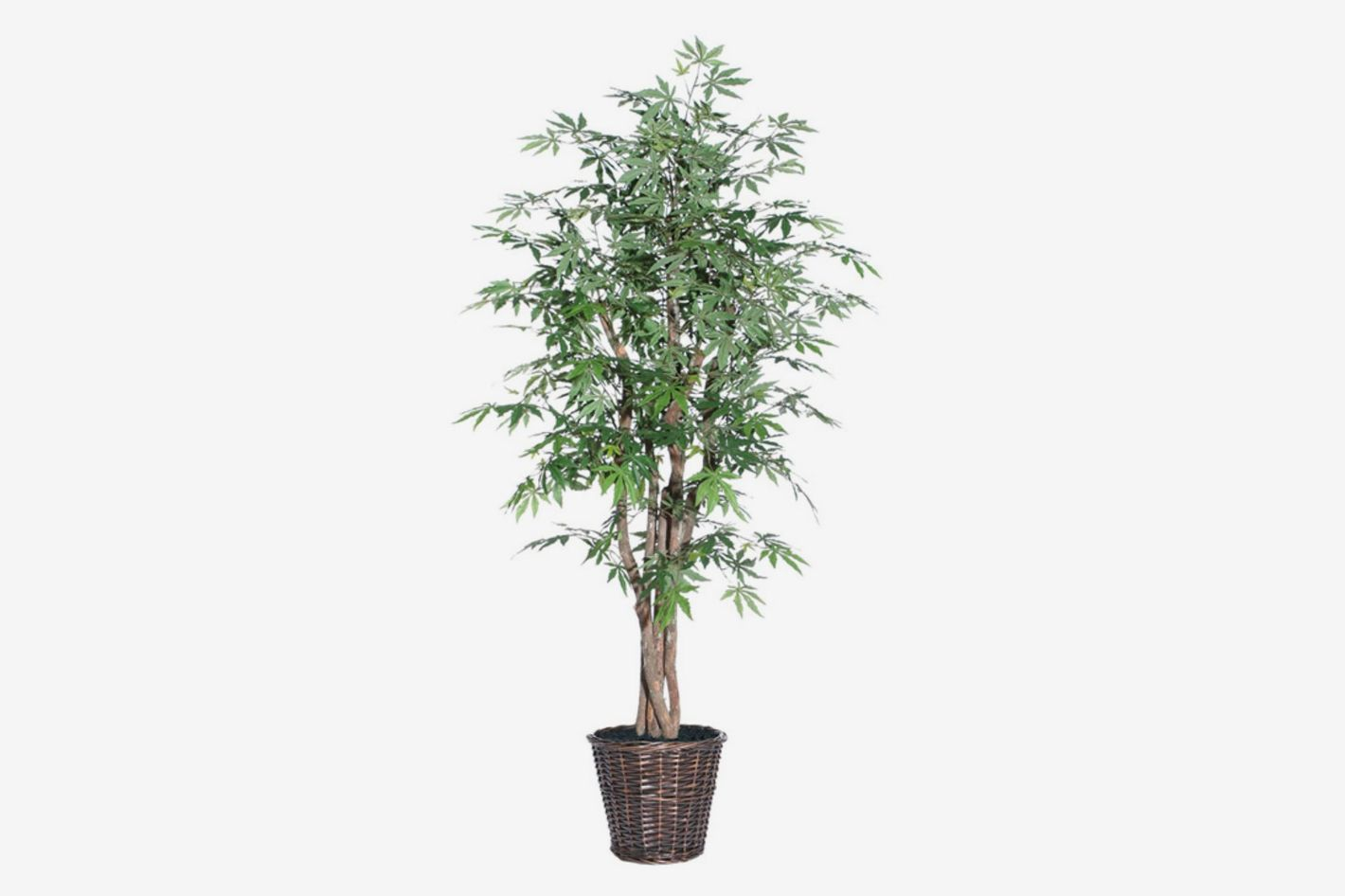 Vickerman 6' Japanese Maple Executive Tree