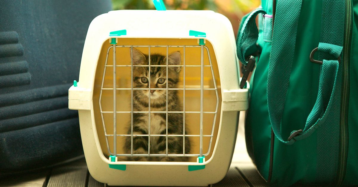The Best Cat Carriers on Amazon, According to Reviewers