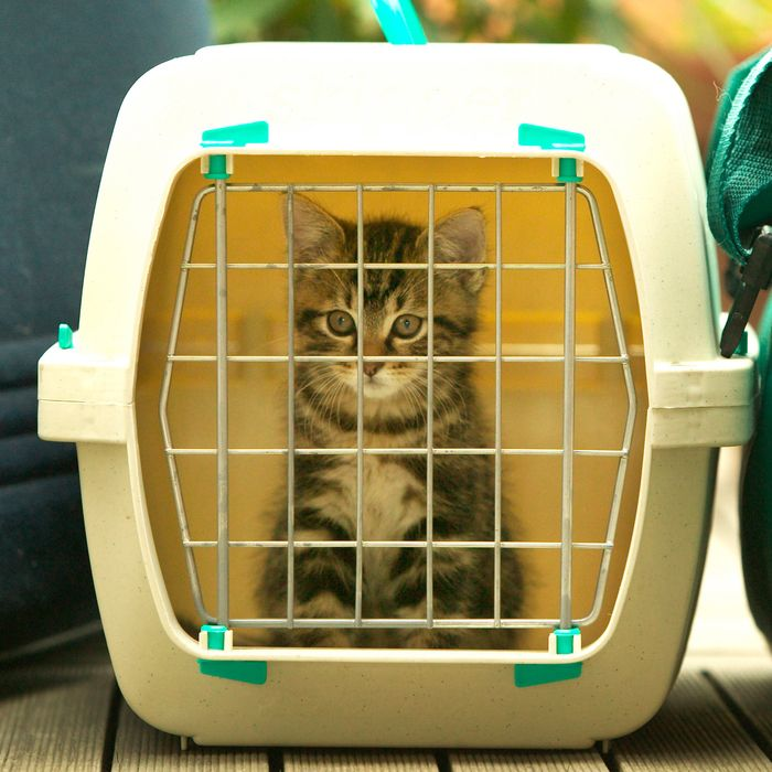 49284dcbb4 The Best Cat Carriers on Amazon, According to Hyperenthusiastic Reviewers