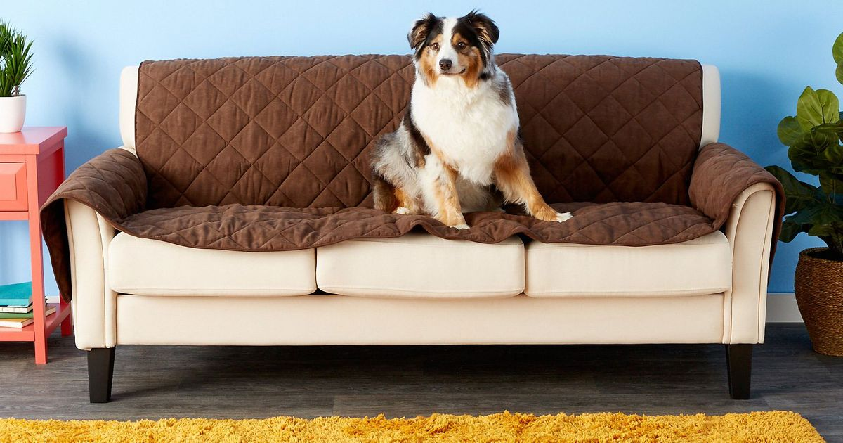 What Pet-Owners Need To Clean and Protect Their Furnishings, According to Experts