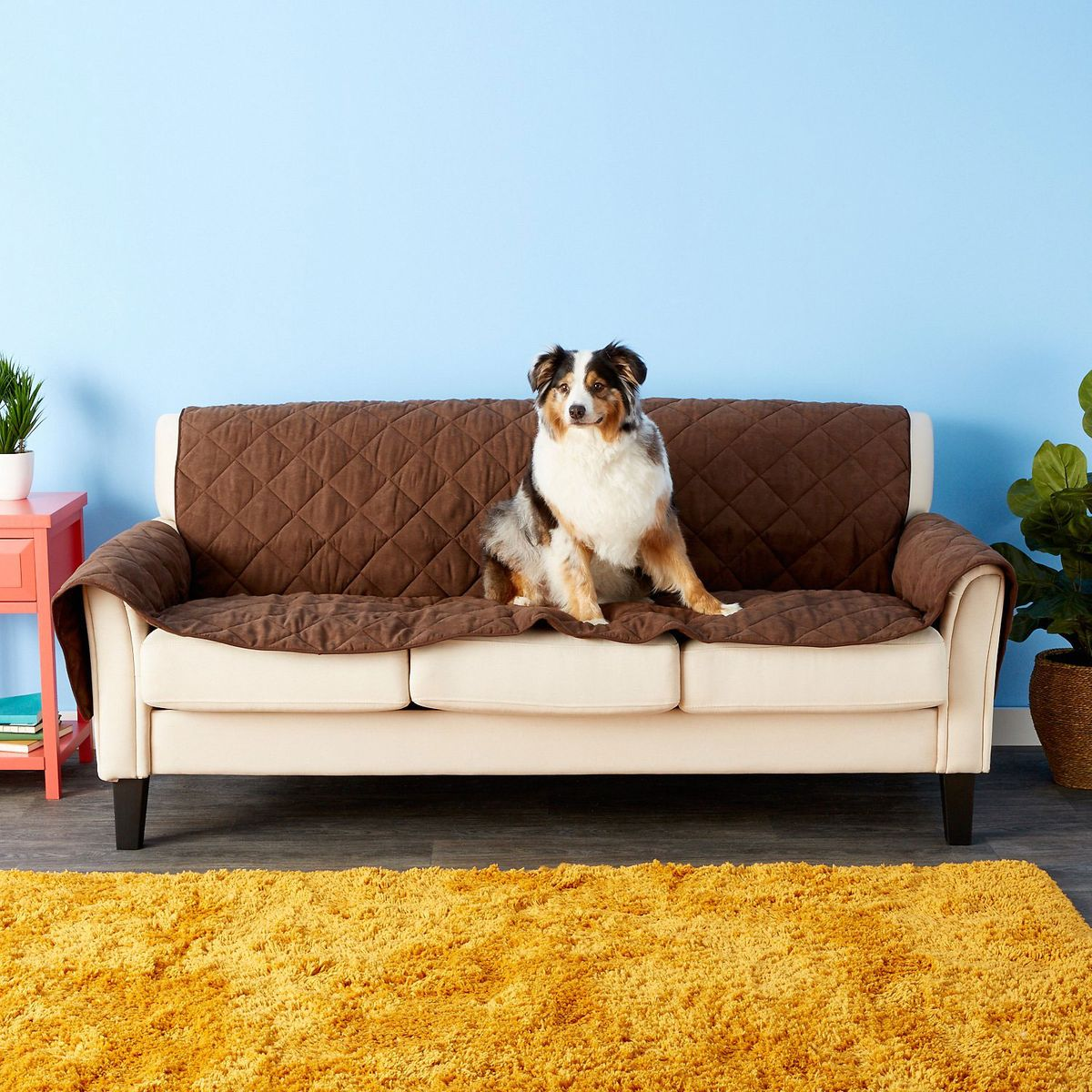 25 Best Pet-Safe Cleaning Products for Pet Messes