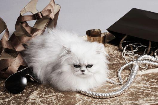 Persian cat resting amongst fashion accessories, studio shot