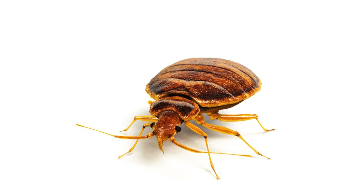 bed removal and in bugs orlando extermination bug insect services control central pest service