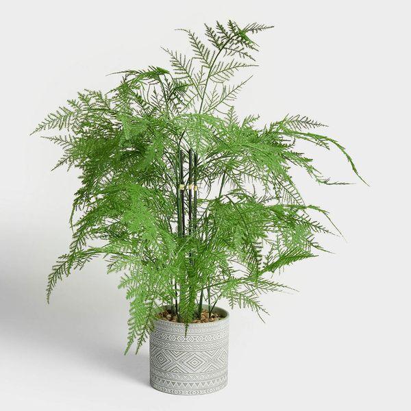 John Lewis & Partners Artificial Asparagus Fern