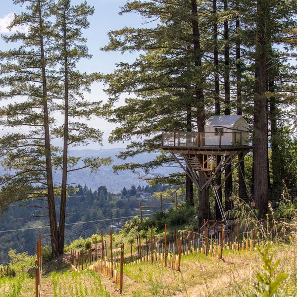 Vineyard Tree House in Los Gatos, California
