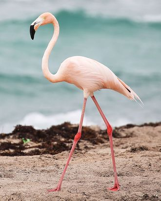 A lone pink flamingo.