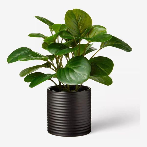 Hilton Carter for Target 10-by-6-Inch Artificial Peperomia-Obtusifolia Plant in Ribbed Ceramic Pot Black