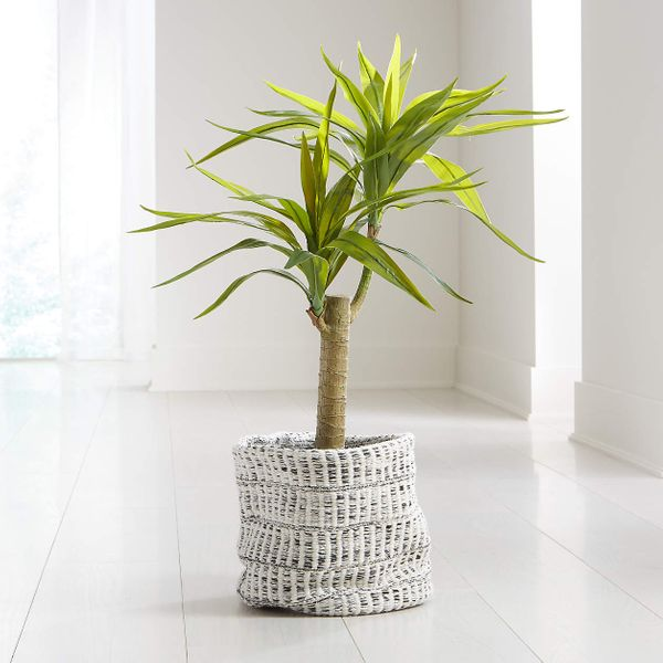Artificial Potted Yucca