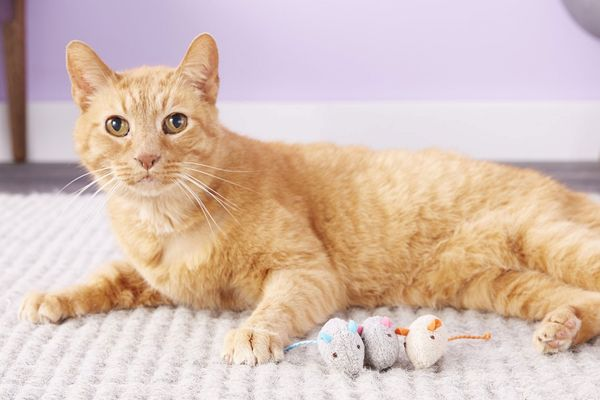 SmartyKat Skitter Critters Catnip Cat Toy