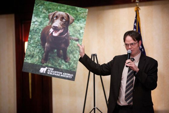 "THE OFFICE -- ""Fundraiser"" Episode 822 -- Pictured: Rainn Wilson as Dwight Schrute -- (Photo by: Tyler Golden/NBC)"